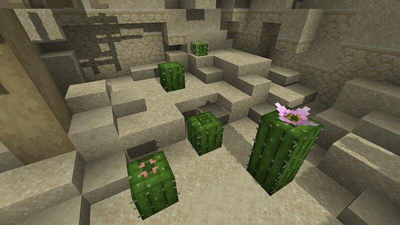 Cactus plants slowly blooming - Sildur's Enhanced Default Shaders