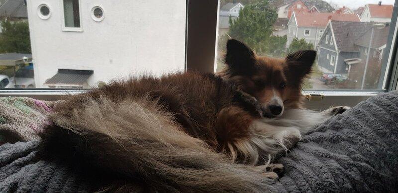 Sleepy doggo who wants u to download le pack