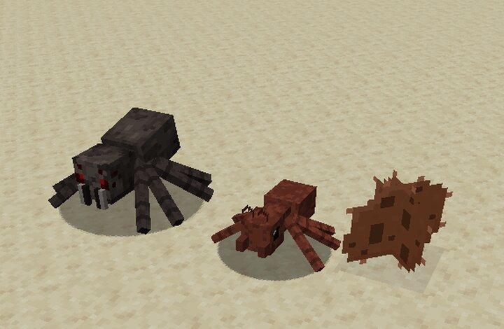 Spider, Cave spider, Cobweb
