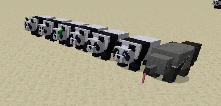 Pandas brown panda is a ant eater because yeah
