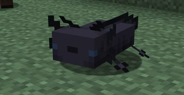 Melanoid axolotls (black axolotls) !!! Minecraft Texture Pack