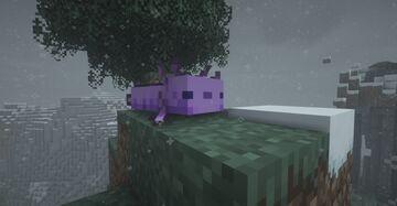 Lavender axolotls! (Purple axolotls) Minecraft Texture Pack