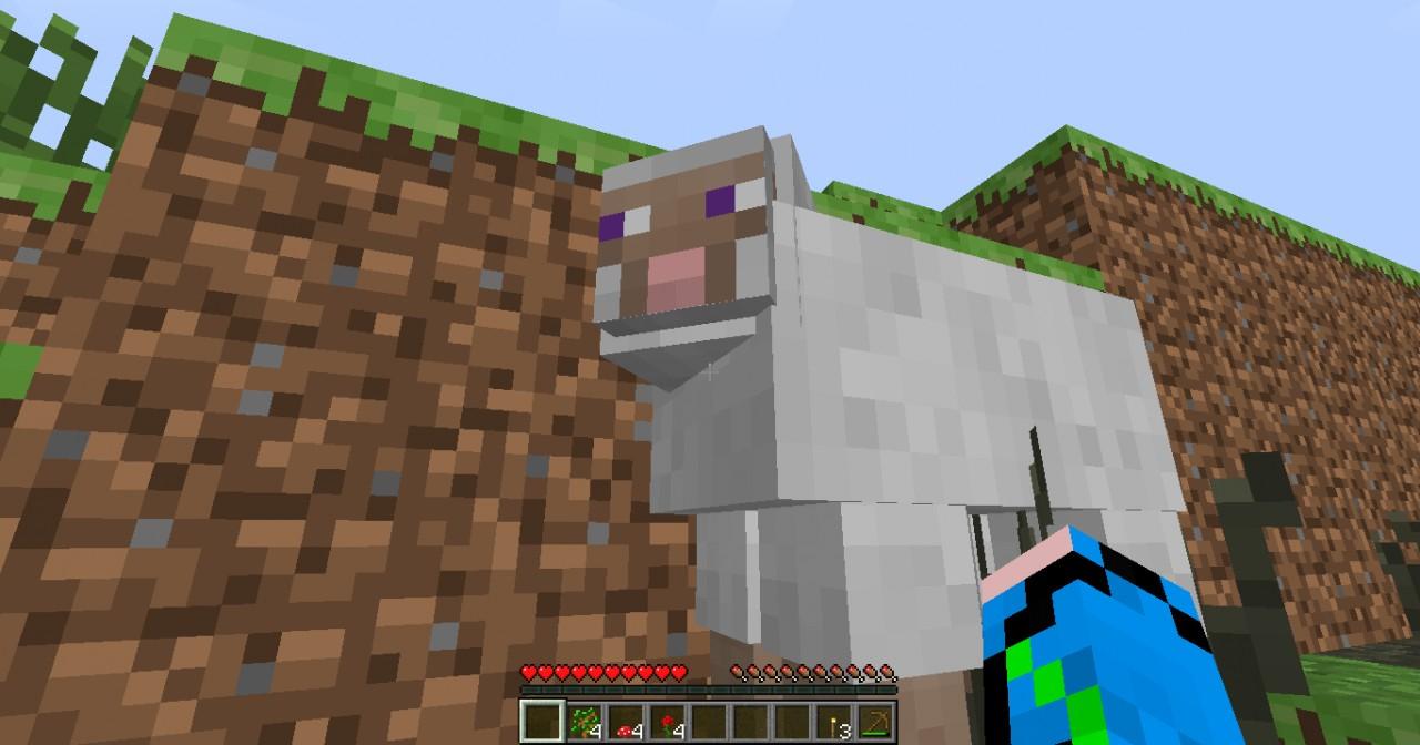 Skeptical Sheep!
