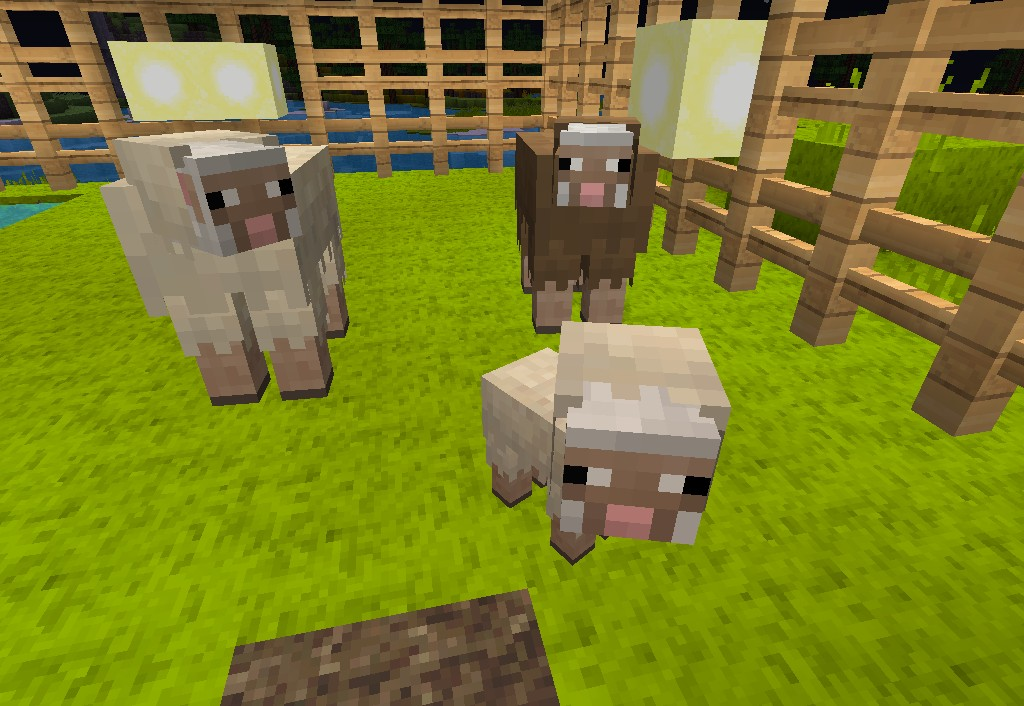 Fred II, the baby brown sheep Minecraft Blog