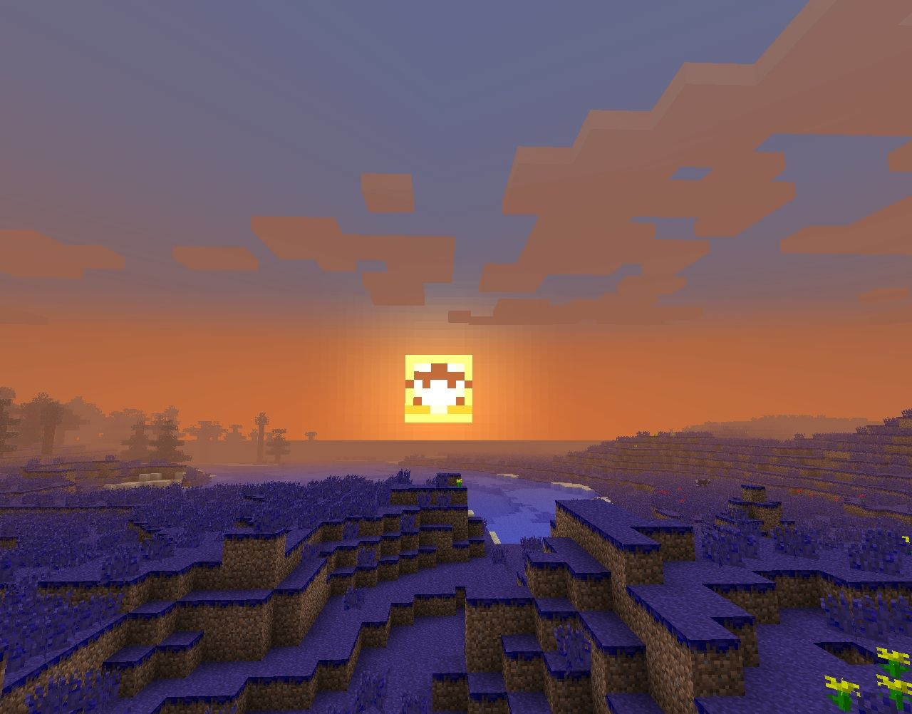 A quirky new sun!
