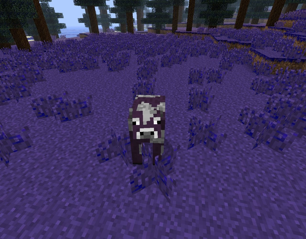 Purple cows!
