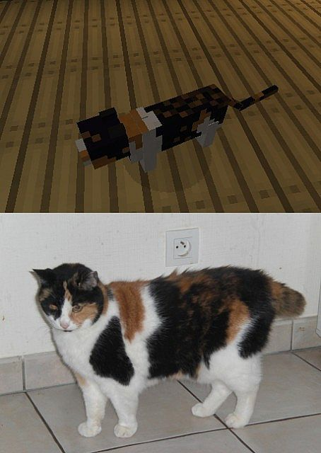 My cat... in Minecraft.