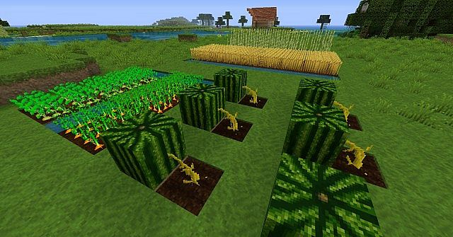 Become a farmer NOW