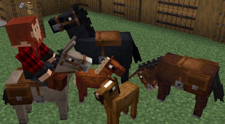 Horse, Donkey, Mule
