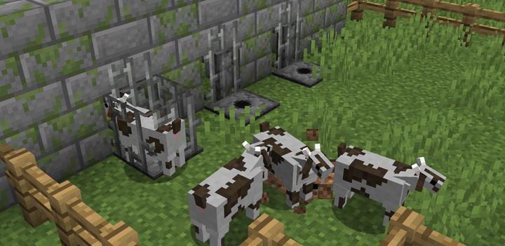 Milking stations to milk goats