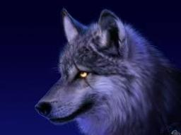 The Story of Dusk The Wolf's Origin Minecraft Blog