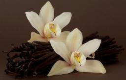 Vanillicious Pure Vanilla - Snapshot 14w04b! Minecraft Server