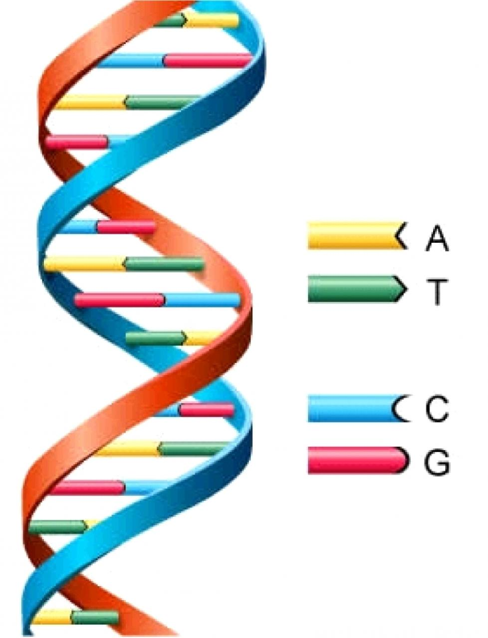 DNA: The Molecular Basics and Techniques for Analysis
