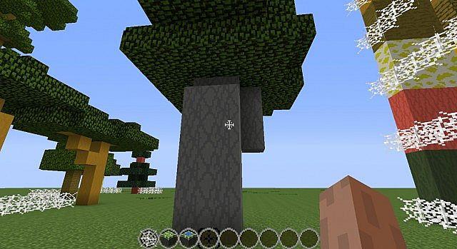 Big oak!