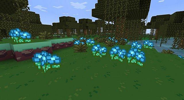 Blue orchids.