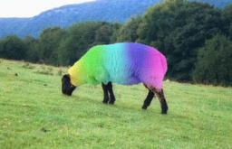 Rainbow sheep making no mods changes color Minecraft Blog Post