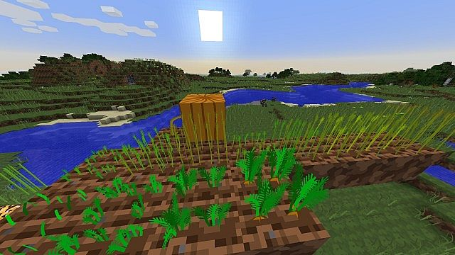 Wheat, carrots and pumpkins
