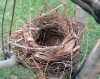 Bird Nest Survival