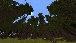 Custom Fir Roofed Forest Minecraft Project