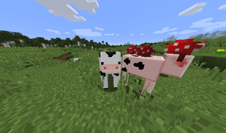 new cow