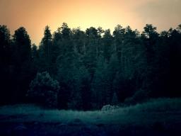 Misty Meadows Pop Reel!!! (finished poem)