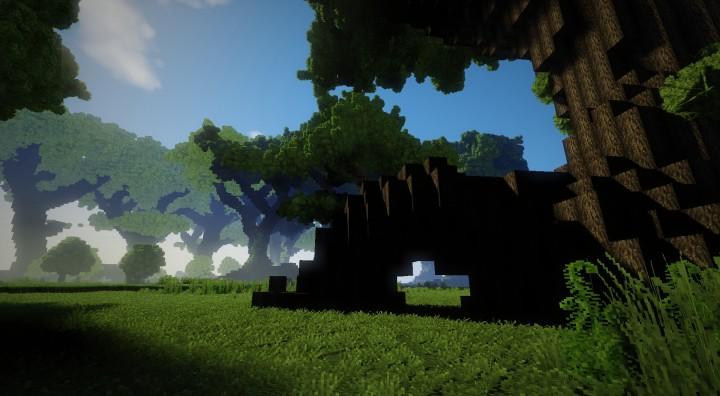 Big Tree Forest