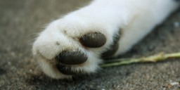 A Trail of Paws (disturbing for cat lovers, your warned x3) (popreel) Minecraft Blog