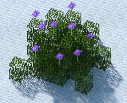 Salvia Leucophylla (Shrub) [Now With Detailed Descriptions] Minecraft