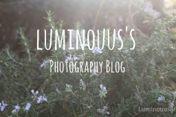 luminouus ☪ | Photography blog | First Popreel ! Minecraft Blog Post