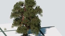 Pinus Radiata Minecraft