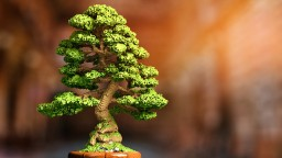 Quiescence - Poised Bonsai Minecraft Project