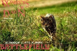 Warrior Cats Fanfic: -book one- Battlefield - PART I - POPREEL!!!!
