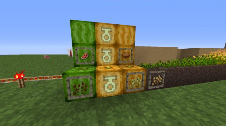 Closer look at pumpkins, melons, and related items