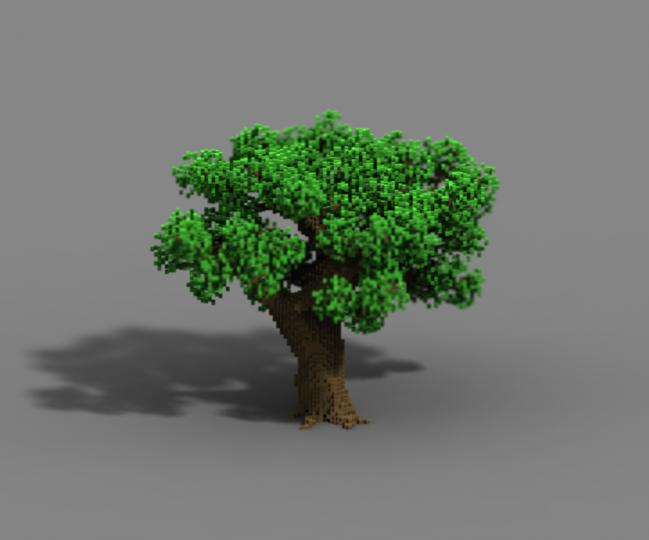 Oak 2-1