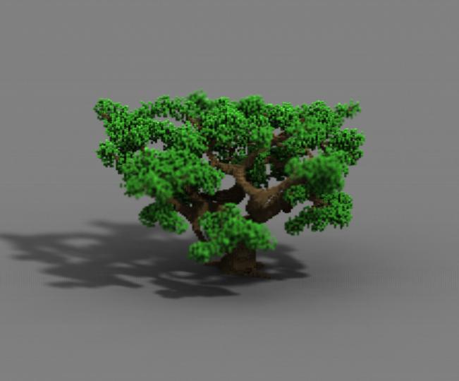 Oak 3-1
