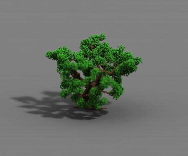 Oak 4-1