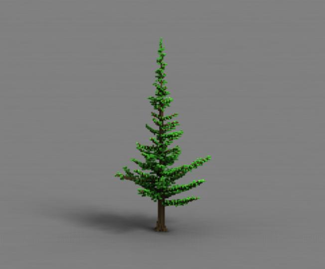 Pine 1-1