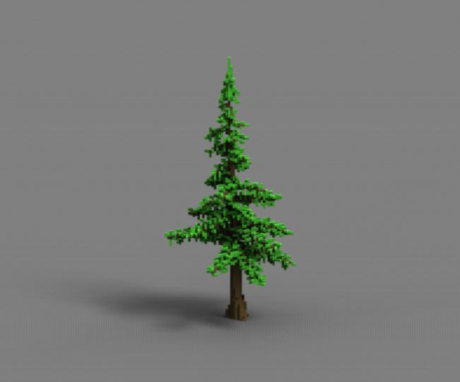 Pine 2-1