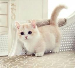 The Cat Blog