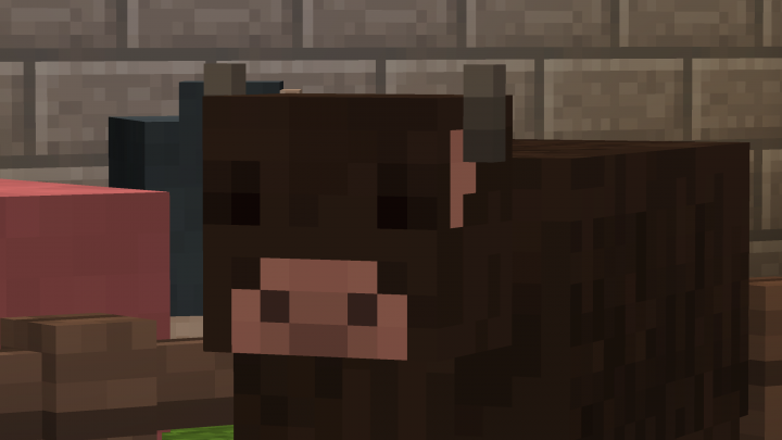 The Cows Are Cute Too!