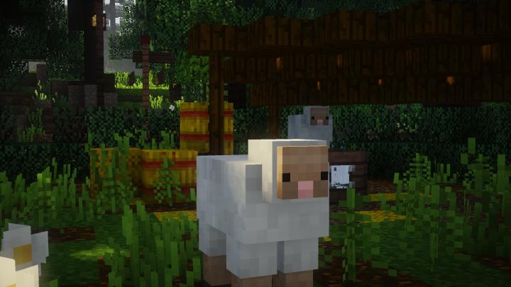 Very Cute Sheep!