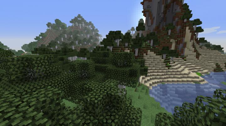 Birch Florest