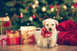 Christmas to a Puppy Minecraft Blog