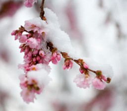 It's a white christmas, but for me it's pink Minecraft Blog