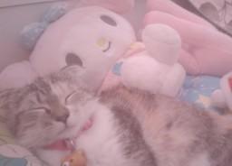 my kitty!! Minecraft Blog