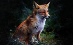 ⚜Λμιςι⚜ - Mystical Foxes Minecraft Blog