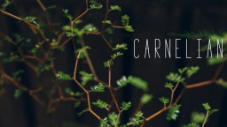 Vignette #15 - Carnelian Minecraft Blog