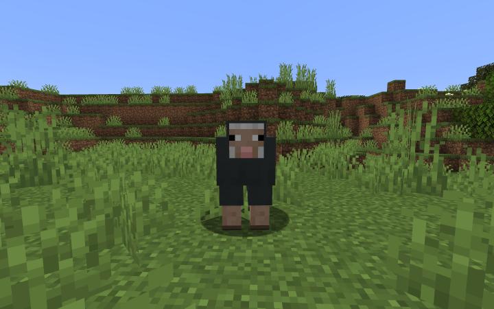 An Innocent Sheep...