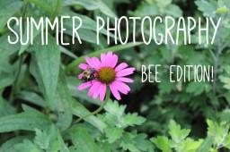 Summer Photography - Bee Edition Minecraft Blog