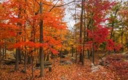 Fall Poems Minecraft Blog